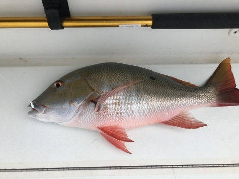 how to catch mutton snapper