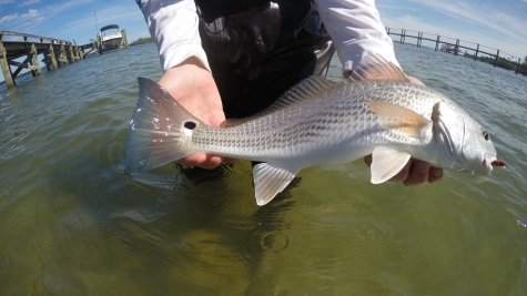 redfish in fort pierce