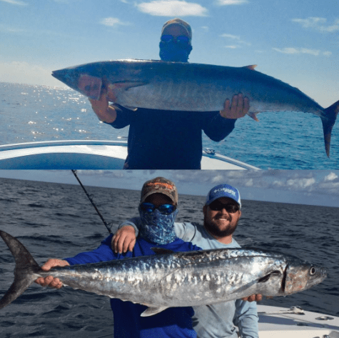 How To: 10 Tips For Catching More & Bigger Kingfish