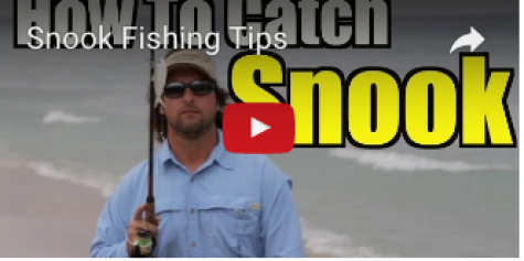 Best Snook Fishing Videos On The Web
